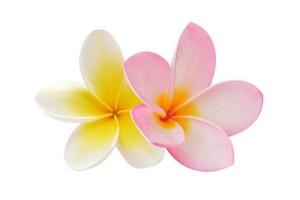 Blumen haben immer eine Bedeutung, die beim Brautstrauß bedacht werden sollte